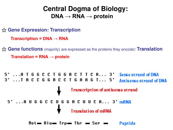 Central Dogma of Biology: