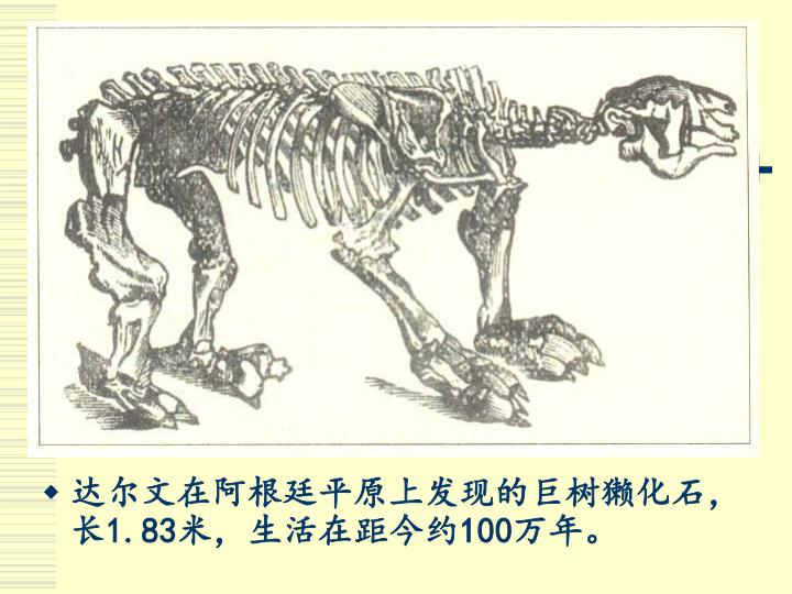 达尔文在阿根廷平原上发现的巨树獭化石,长
