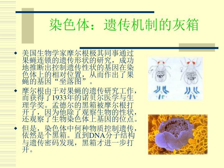 染色体:遗传机制的灰箱