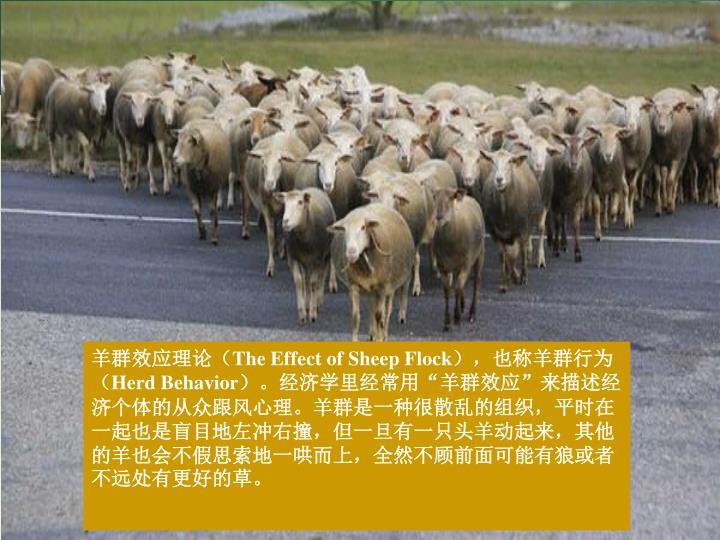 羊群效应理论(