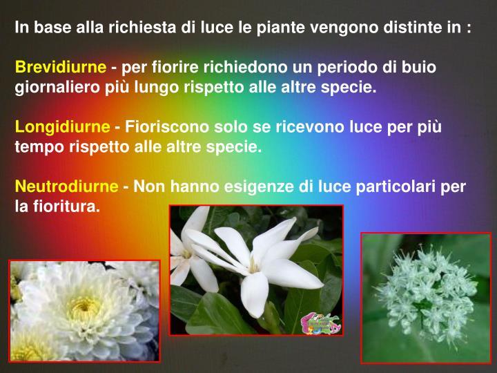 In base alla richiesta di luce le piante vengono distinte in :