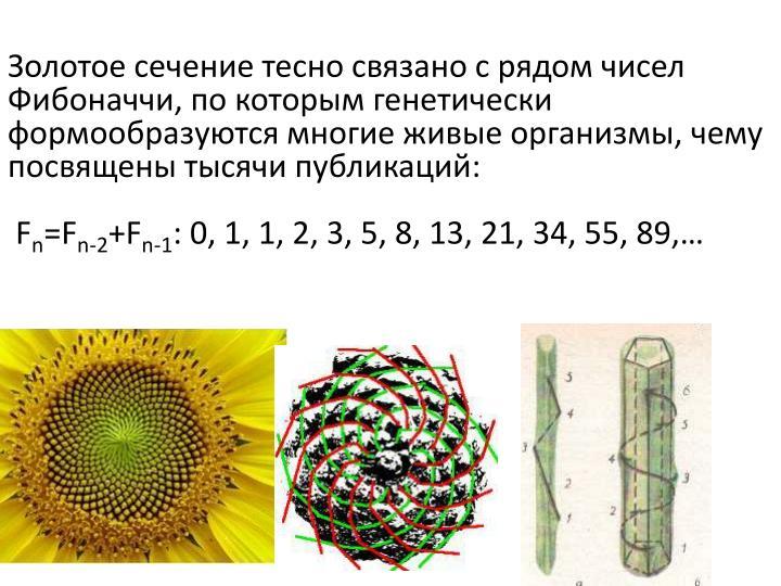 Золотое сечение тесно связано с рядом чисел Фибоначчи, по которым генетически формообразуются многие живые организмы, чему посвящены тысячи публикаций: