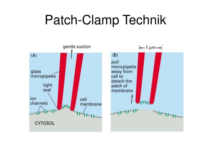 Patch-Clamp Technik
