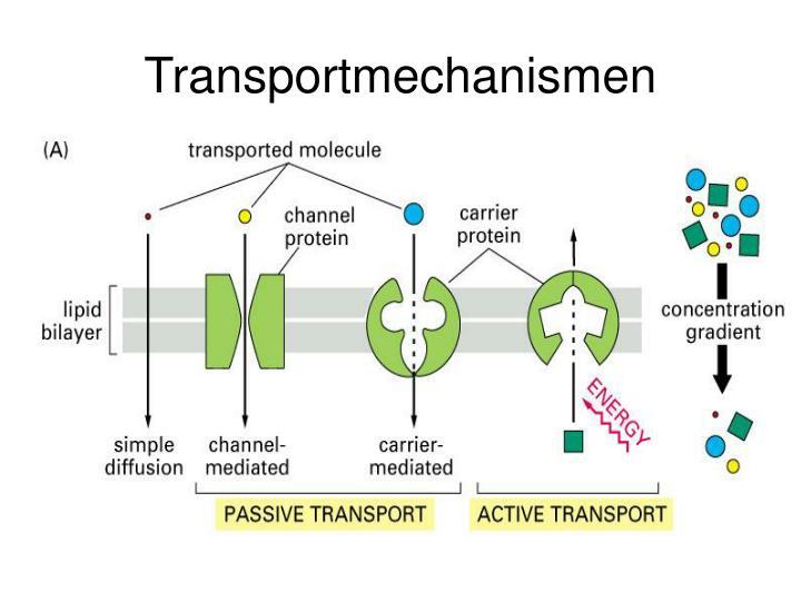 Transportmechanismen