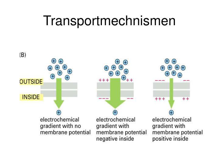 Transportmechnismen