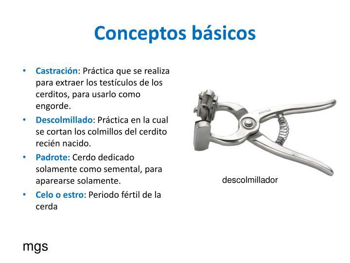 Conceptos b sicos1