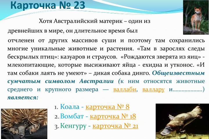 Карточка № 23