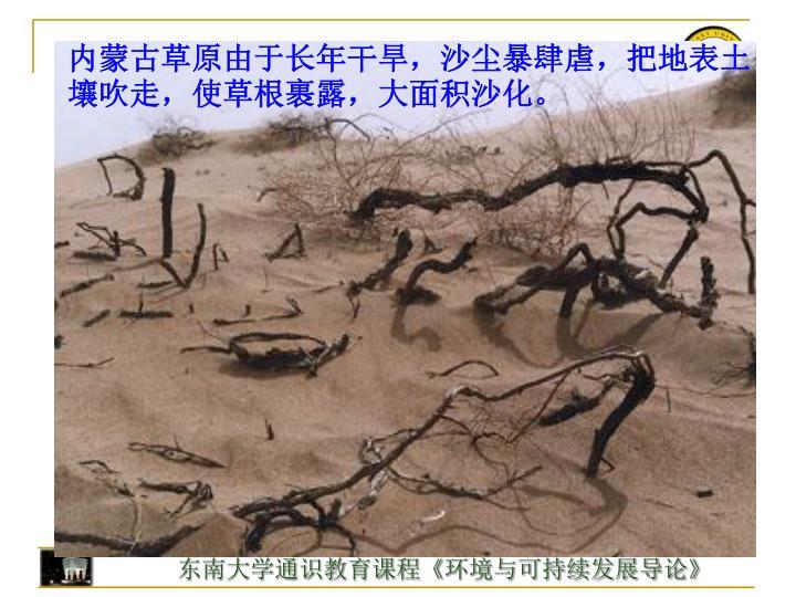 内蒙古草原由于长年干旱,沙尘暴肆虐,把地表土壤吹走,使草根裹露,大面积沙化。