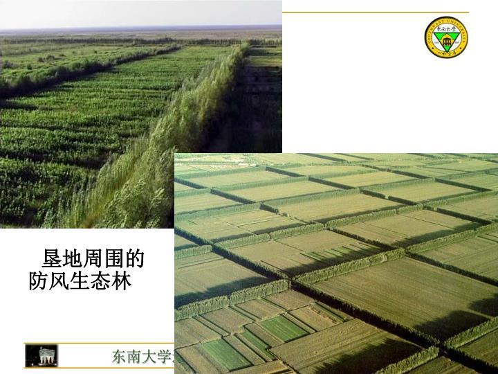 垦地周围的防风生态林