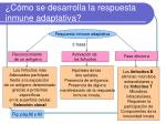 c mo se desarrolla la respuesta inmune adaptativa
