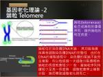 2 telomere
