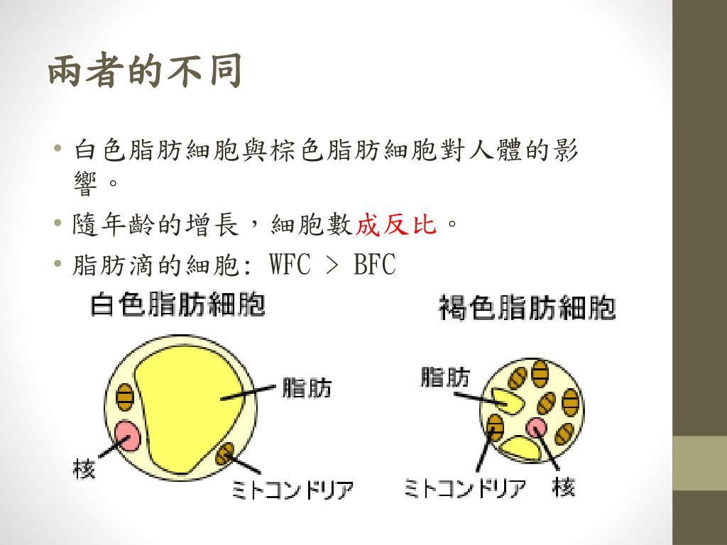 脂肪 細胞 褐色