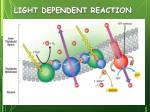 light dependent reaction1