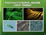 photoautotrophs absorb light energy