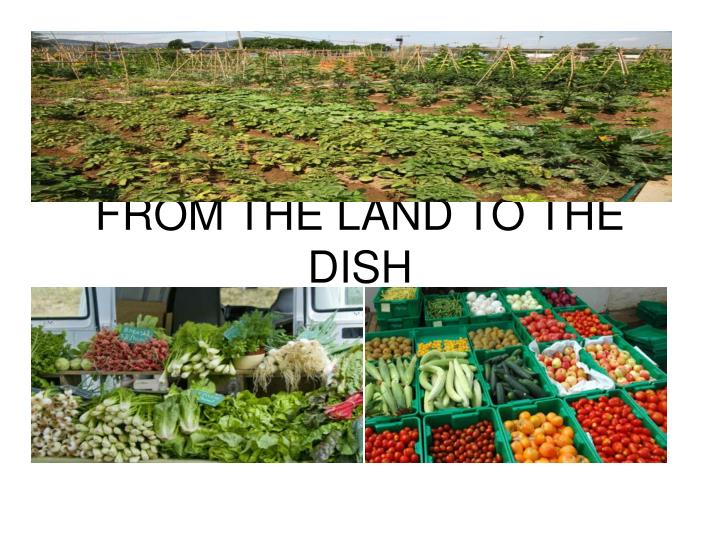 from the land to the dish n.