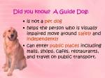 did you know a guide dog