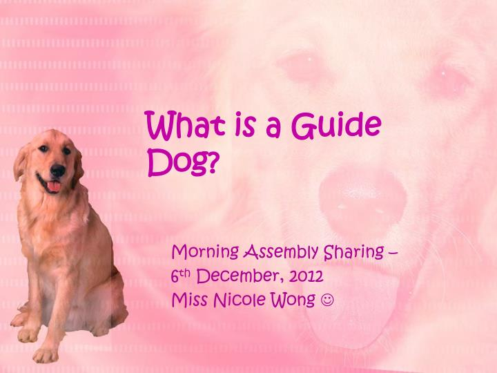 what is a guide dog n.