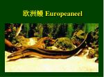 europeaneel