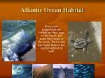 atlantic ocean habitat