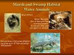 marsh and swamp habitat water animals