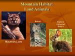 mountain habitat land animals