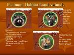 piedmont habitat land animals