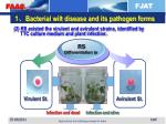 1 bacterial wilt disease and its pathogen forms1