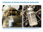 production of limulus amebocyte lysate lal