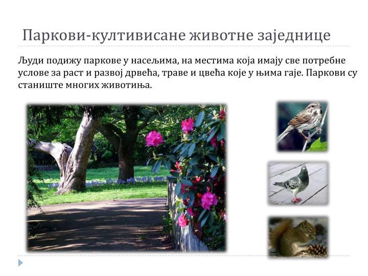 Паркови-култивисане животне заједнице