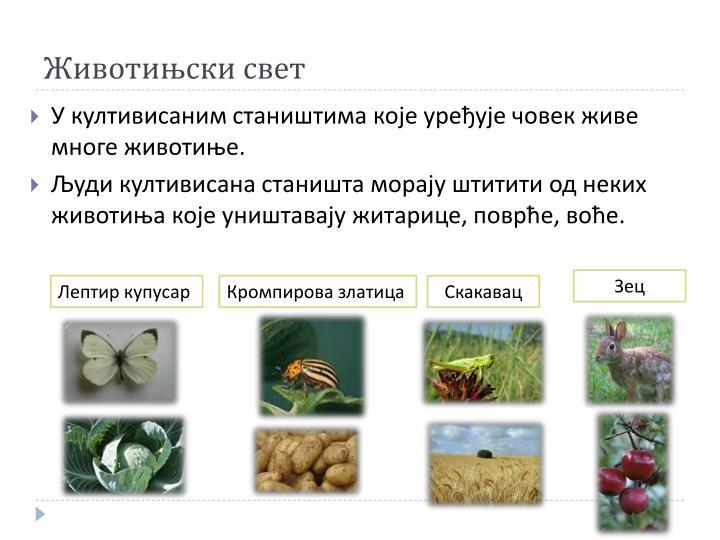 Животињски свет