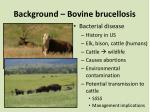 background bovine brucellosis