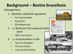 background bovine brucellosis1