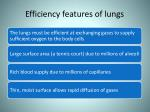efficiency features of lungs