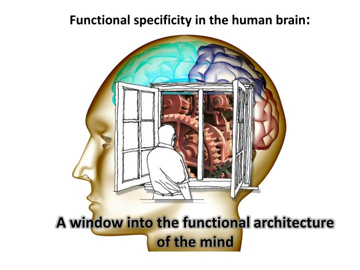 a window into the functional architecture of the mind n.