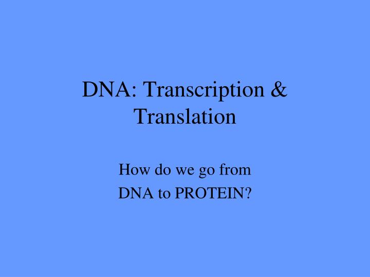 dna transcription translation n.