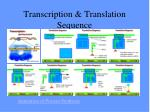 transcription translation sequence
