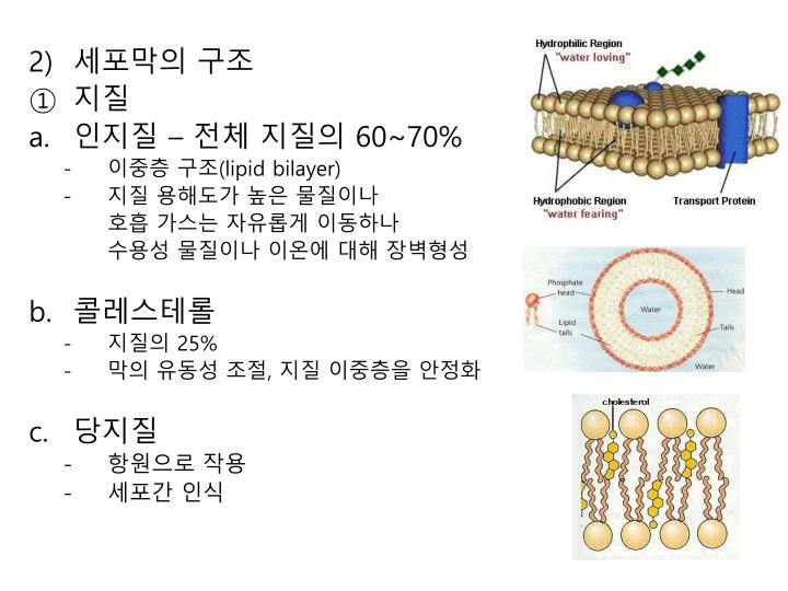 세포막의 구조
