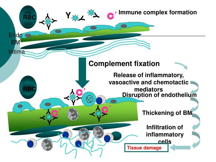 Immune complex formation