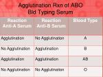 agglutination rxn of abo bld typing serum