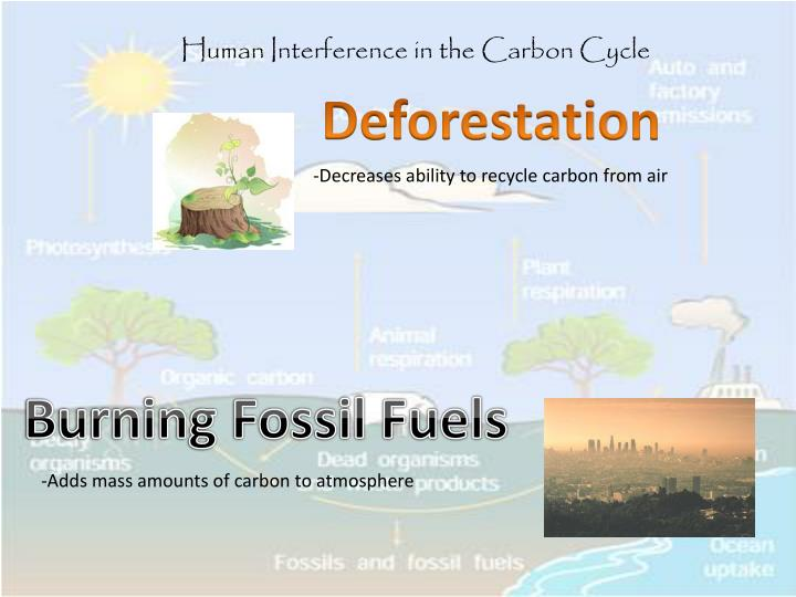 Human Interference in the Carbon Cycle