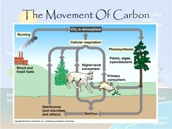 The Movement Of Carbon
