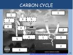 carbon cycle1