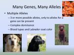 many genes many alleles2