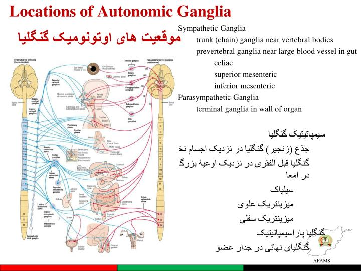 Locations of Autonomic Ganglia