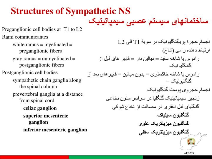 Structures of Sympathetic NS