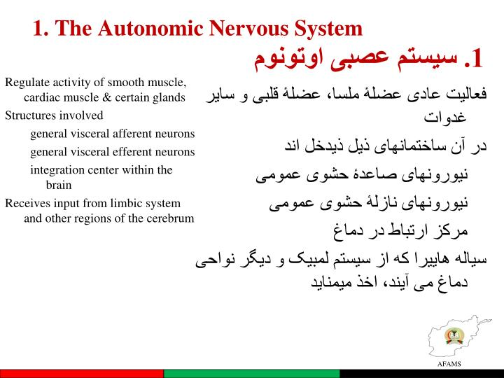 1. The Autonomic Nervous System