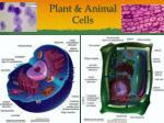 plant animal cells