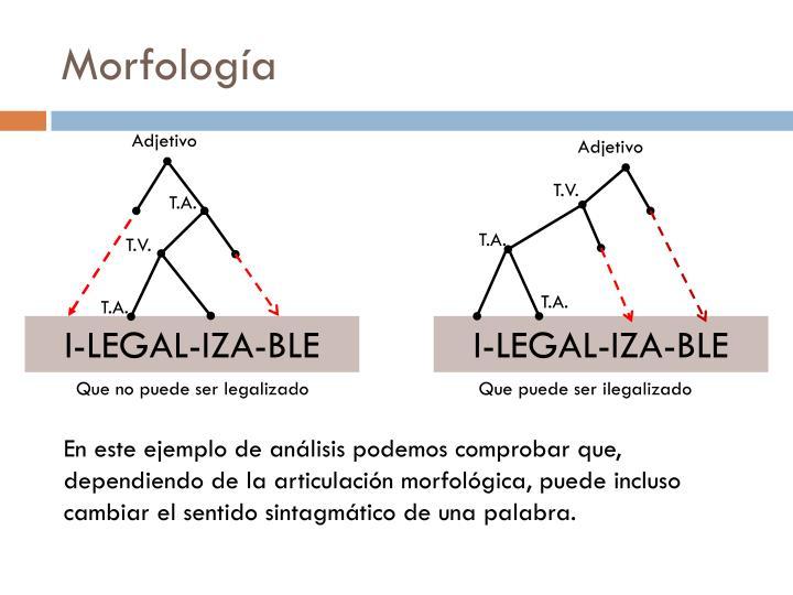 Morfolog a2