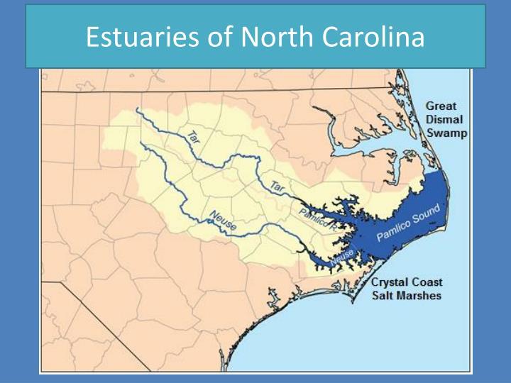 Estuaries of North Carolina