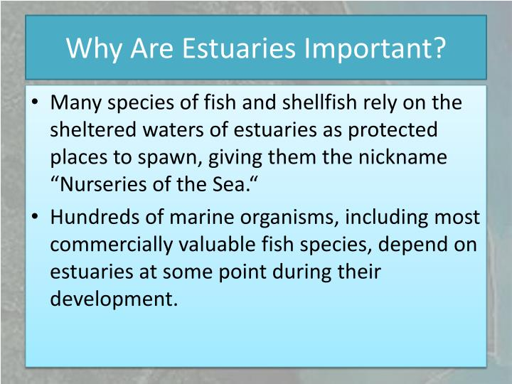 Why Are Estuaries Important?